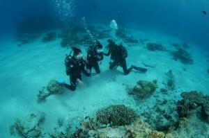 6f5624bea81768e4edc3fd46c3c6aa3c 300x199 Trial Diving
