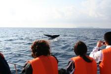 ww a b 赏鲸