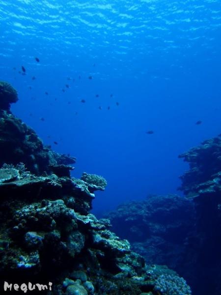 IMG 5114 落水で体験ダイビングー♪