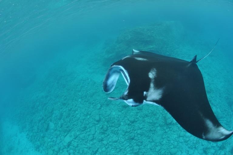 DSC 0522 潜ったり、泳いだり、パーティーしたり、打ち上げしたり、楽しかったり、疲れたり。