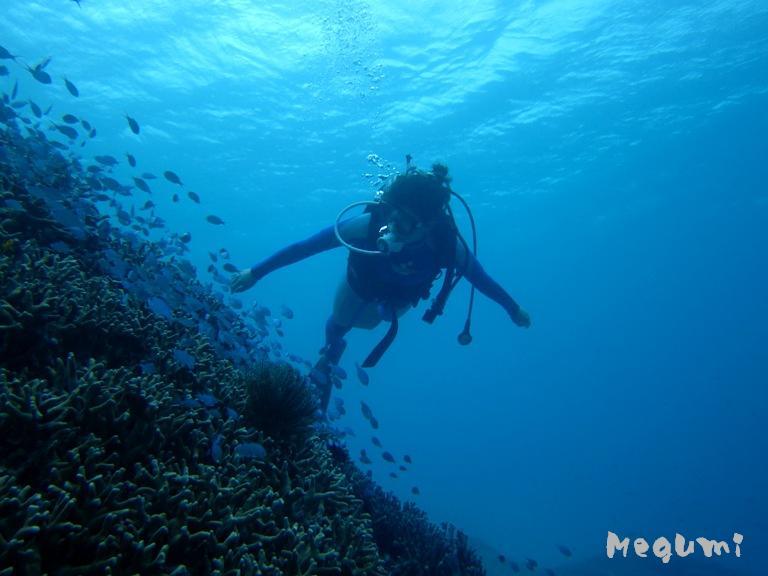 IMG 9041 海の中は別世界なのです。