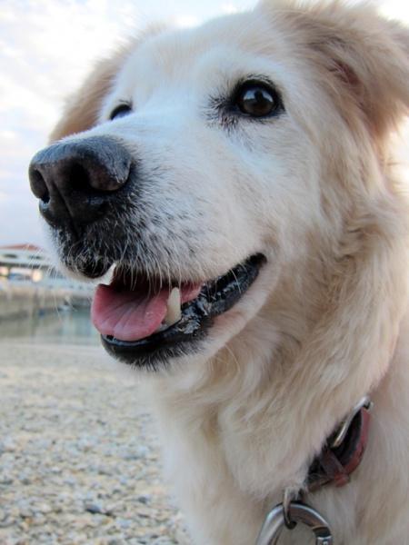 IMG 9261 犬×1 + 人間×6。