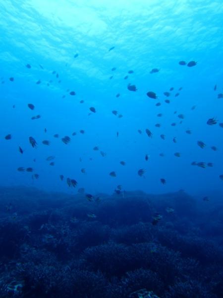 IMG 0979 水の中は快適なのです♪