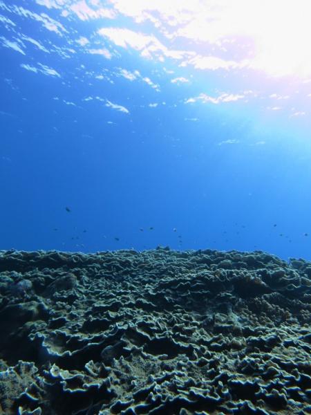 IMG 5896 最近の座間味。最近の海。最近のくらら。