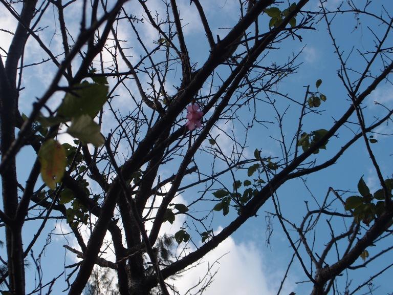 P1152245 笹さんの写真。