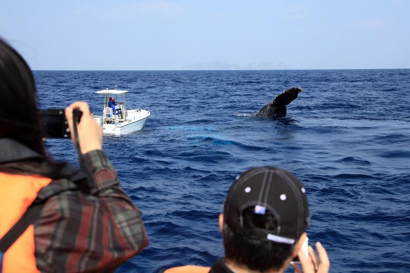 IMG 0091 クジラ湧く、座間味の海。