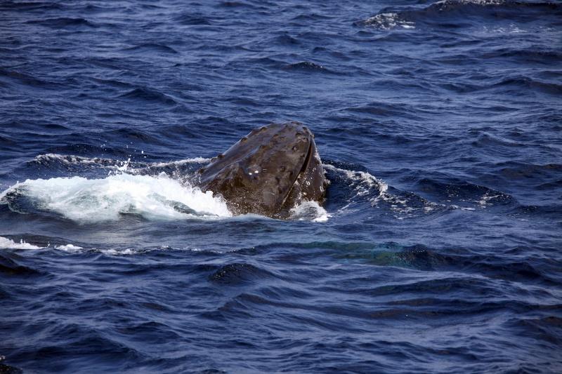 IMG 0114 カメにクジラにるるるるる~♪