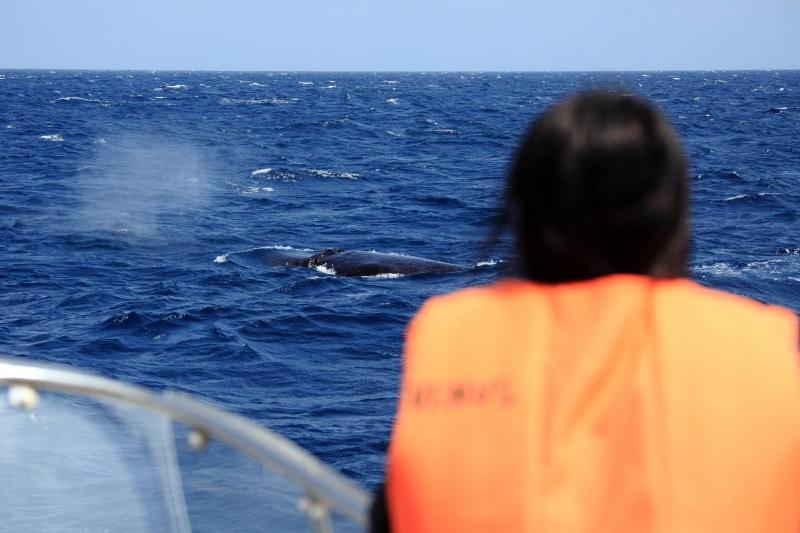 IMG 0421 カメにクジラにるるるるる~♪