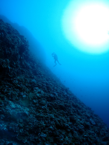 P5061089 深く、深く・・・。そして発見!