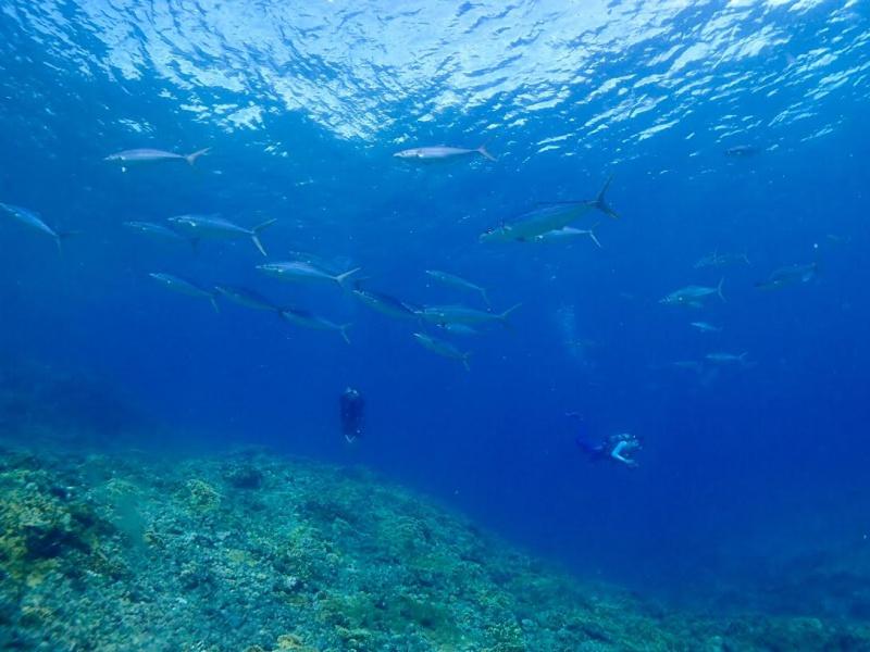 unnamed 5 珍しい魚たち。
