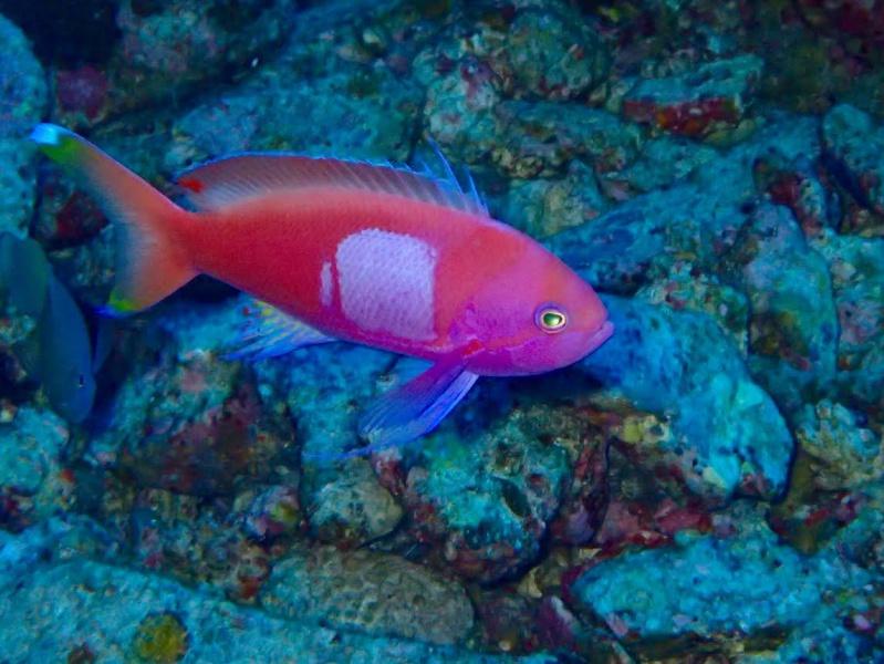 unnamed1 珍しい魚たち。