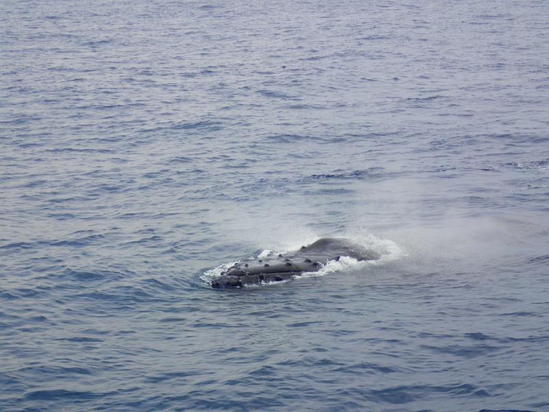 P3151210 波も落着き。ホエールウォッチング!