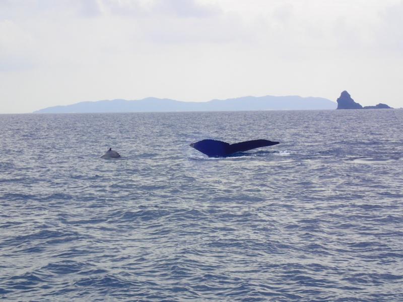 P3171284 穏やかぁーな海。ホエールウォッチング!