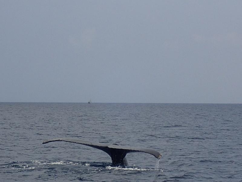 P3171289 穏やかぁーな海。ホエールウォッチング!