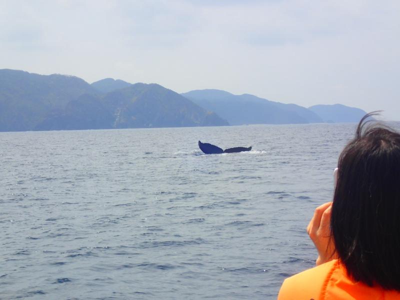P3171300 穏やかぁーな海。ホエールウォッチング!