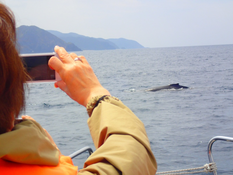 P3171303 穏やかぁーな海。ホエールウォッチング!
