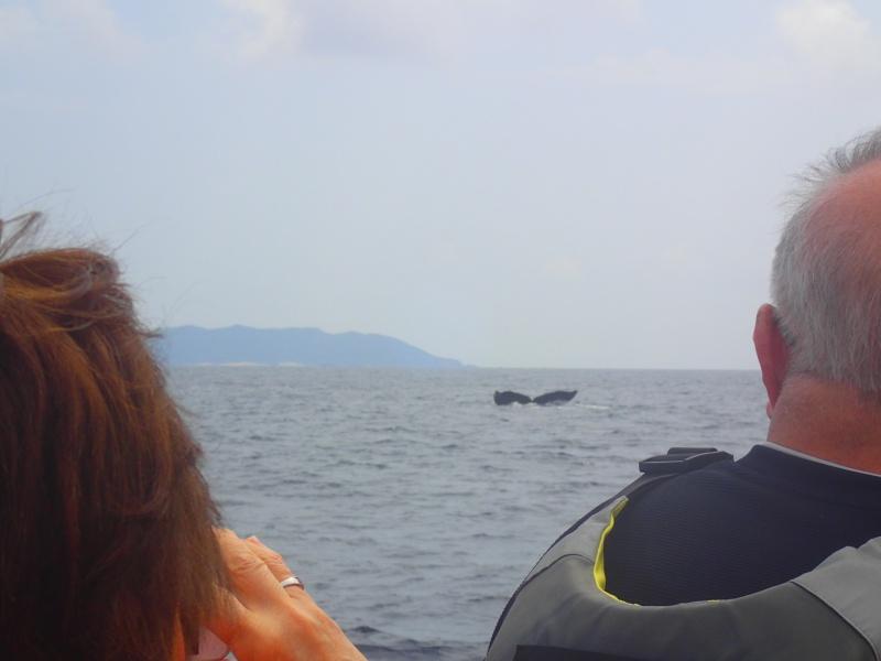 P3171333 穏やかぁーな海。ホエールウォッチング!