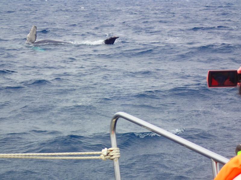P3271706 昨日はクジラの音楽祭!&ホエールウォッチング!
