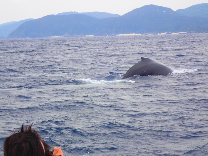 P3271722 昨日はクジラの音楽祭!&ホエールウォッチング!