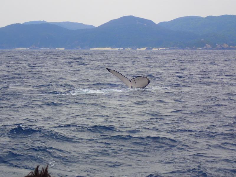 P3271723 昨日はクジラの音楽祭!&ホエールウォッチング!