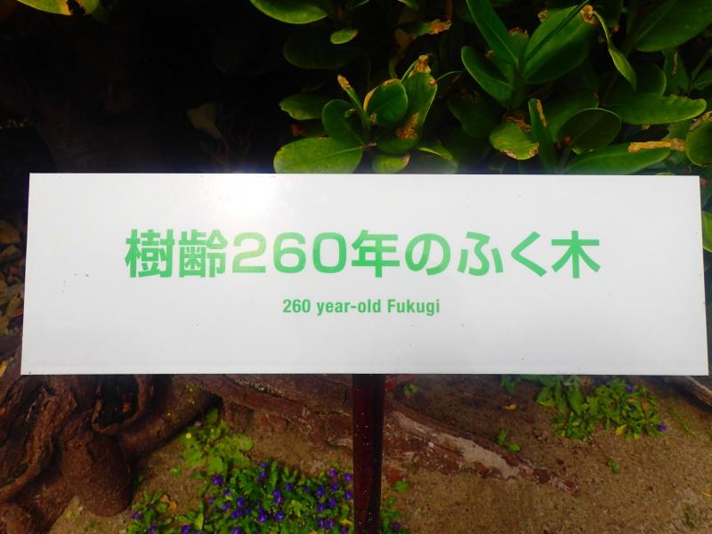 P4062023 初上陸!渡名喜観光♪