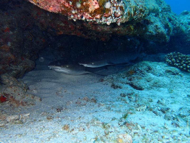 P4172522 Fun diving!!& もずくの日!