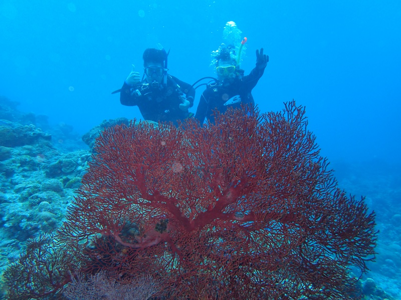 P4172523 Fun diving!!& もずくの日!