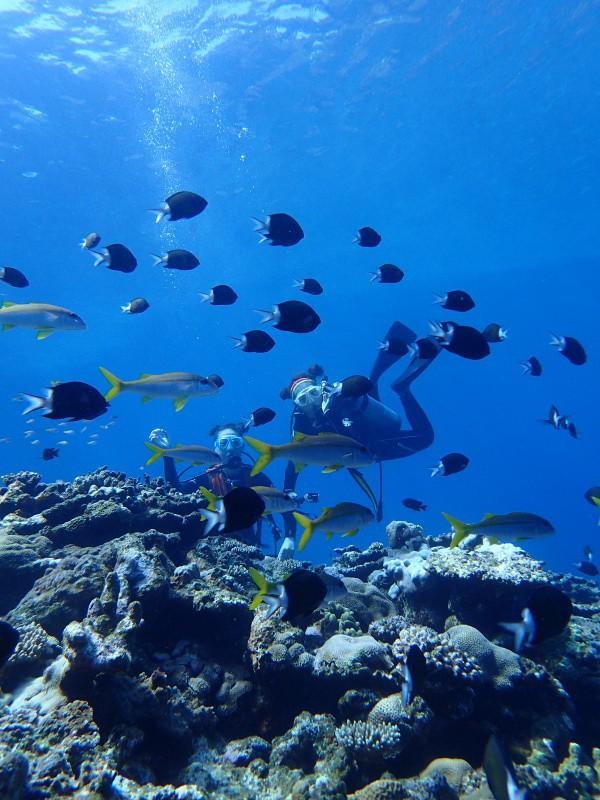 P7288026 e1469707794163 小魚時々亀。ダイビング!