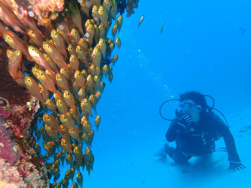 P7288125 小魚時々亀。ダイビング!