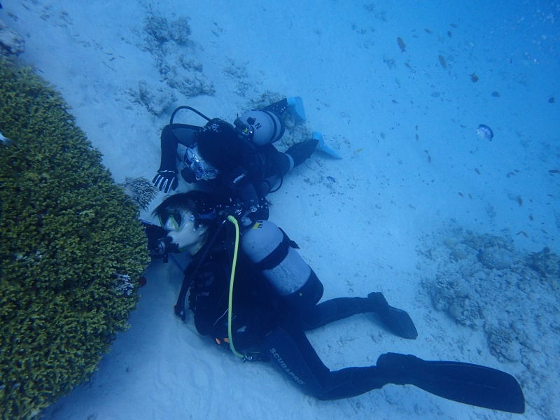 P7288151 小魚時々亀。ダイビング!