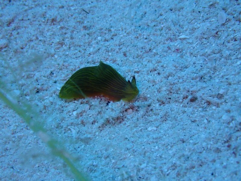 P4146016 魚は左向き。ダイビング!