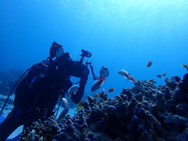 P4146028 魚は左向き。ダイビング!