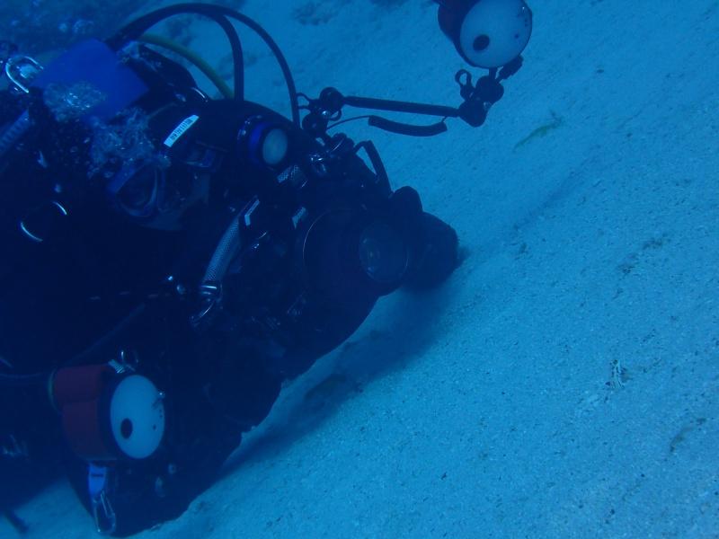 P4146036 魚は左向き。ダイビング!