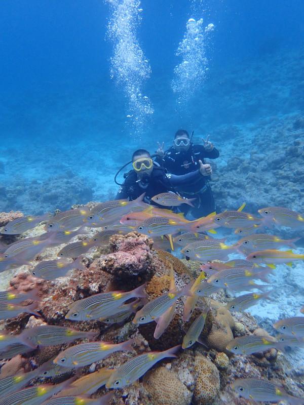 P4156045 e1492341398518 魚は左向き。ダイビング!