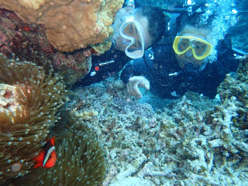 P4156051 魚は左向き。ダイビング!