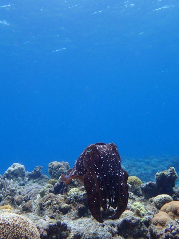 P4156088 e1492341550744 魚は左向き。ダイビング!