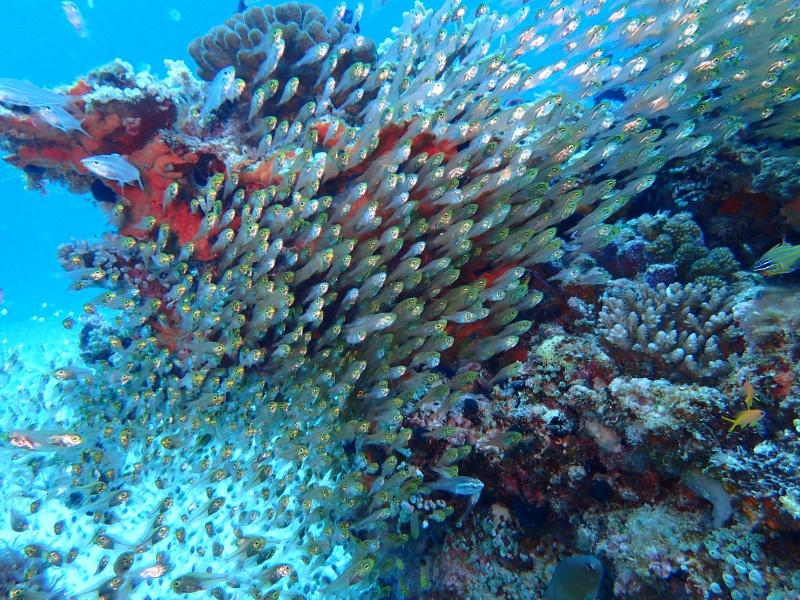 P4166125 魚は左向き。ダイビング!