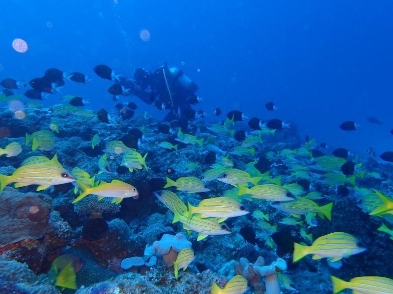 P4166161 魚は左向き。ダイビング!