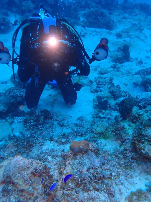 P4166166 e1492342133482 魚は左向き。ダイビング!