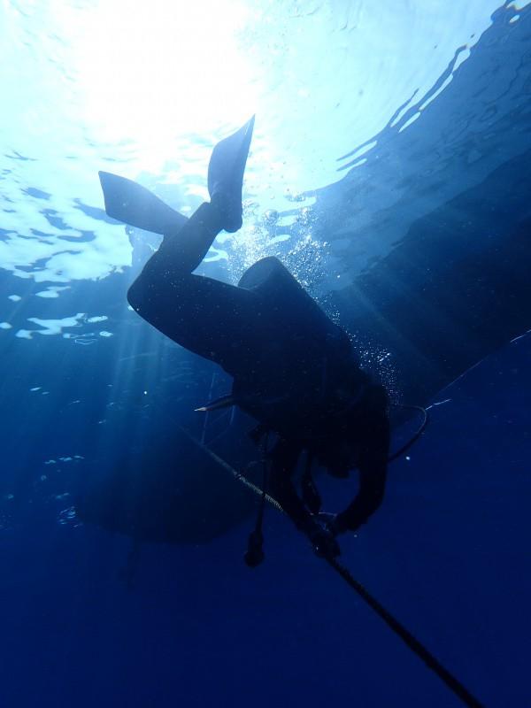 P4216253 e1492772853312 勲章だらけの魚眼。ダイビング!