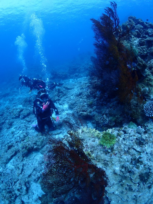 P4216262 e1492773001163 勲章だらけの魚眼。ダイビング!