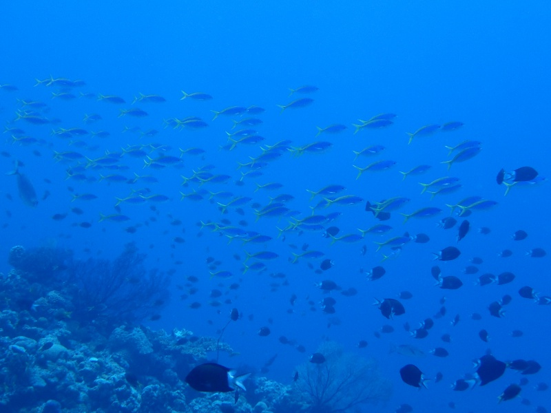 P4216275 勲章だらけの魚眼。ダイビング!