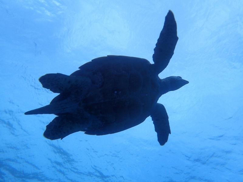 P5026855 初めての男の子。ダイビング!