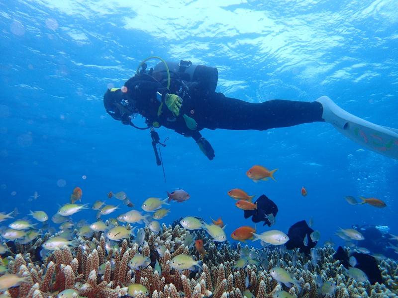 P5026859 初めての男の子。ダイビング!