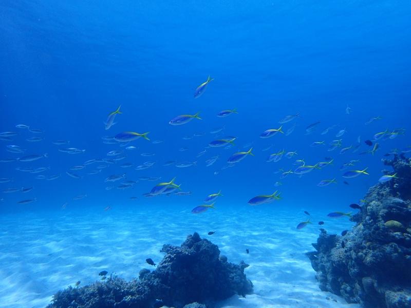 P5046991 Wide n macro! Diving!