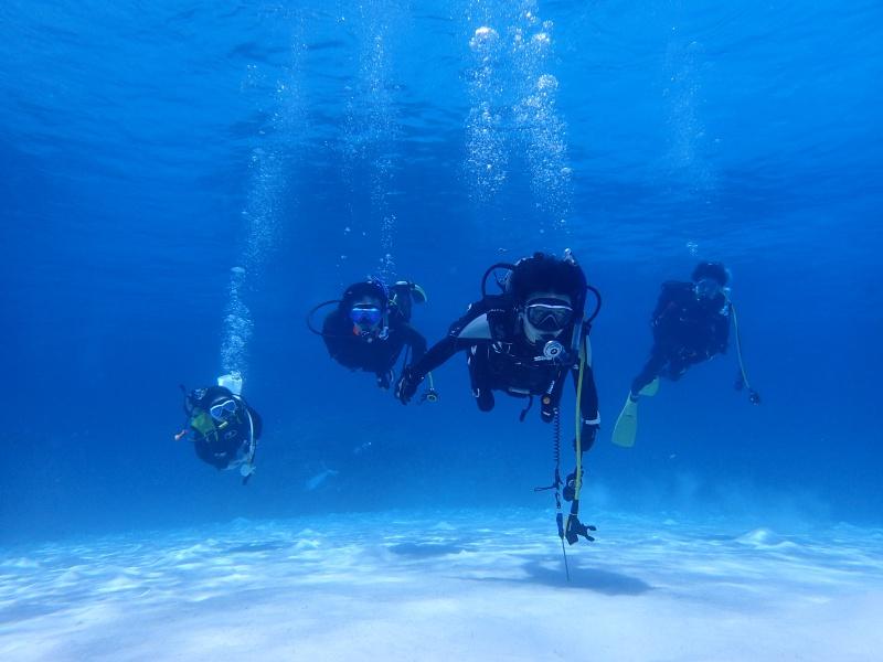 P5047031 Wide n macro! Diving!
