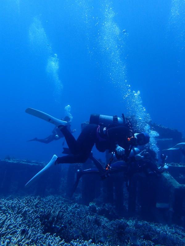 P5047053 e1493989267886 Wide n macro! Diving!