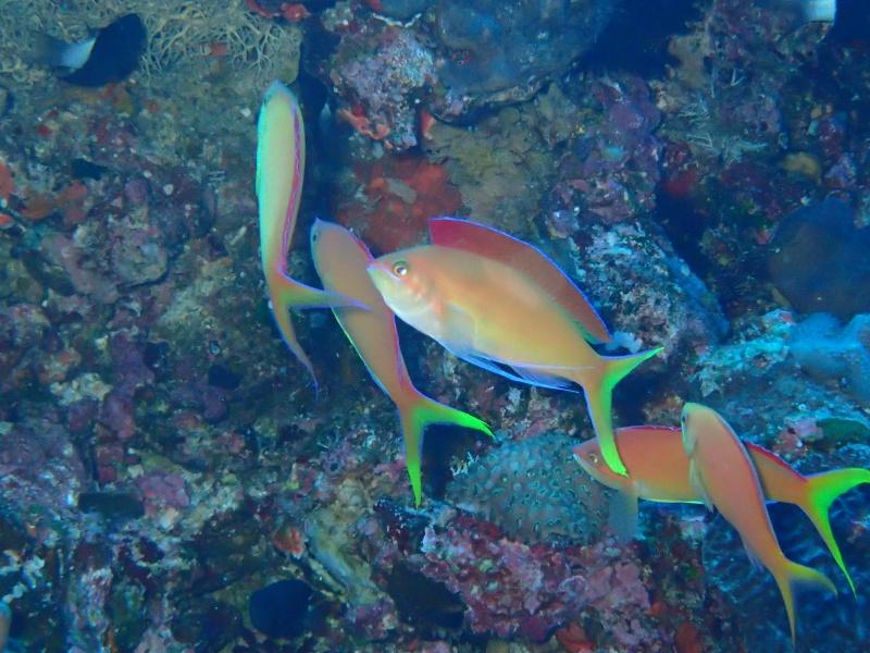 P5057116 Wide n macro! Diving!