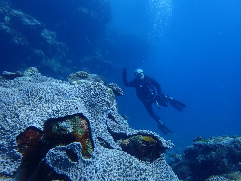 P7160928 サンゴ&デバ。ダイビング!