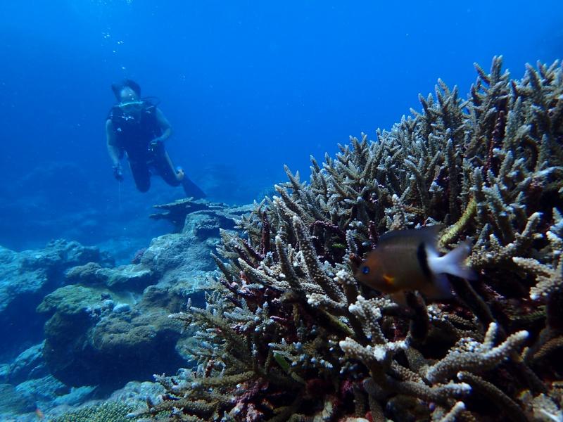P7160940 サンゴ&デバ。ダイビング!